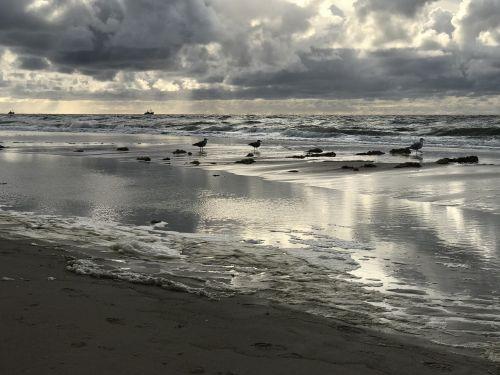 jūra,kajakas,abendstimmung