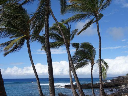 jūra,vandenynas,palmės,papludimys,šventė,ilgesys,Hawaii,vėjas,debesys