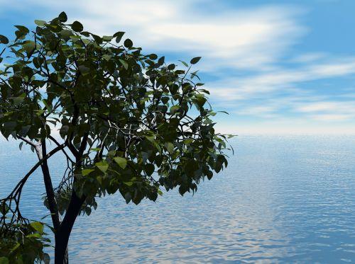 jūra,vandenynas,vanduo,dangus,debesys,pavasaris,vasara,medis,medžiai,filialai,lapija,gamta,lauke,lauke,gražus,lauke