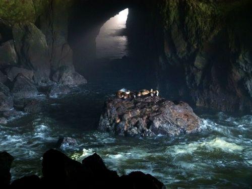 jūrų liūto urvas,ruoniai,juros liutai,urvas,vanduo,bangos,akmenys