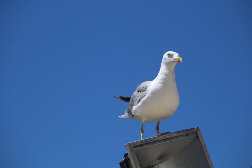 kajakas,žibintas,dangus,paukštis,mėlynas,sėdėti