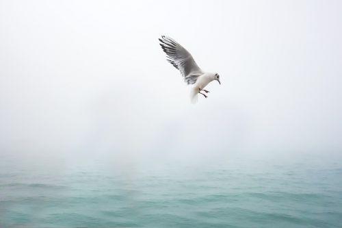 kajakas,paukštis,jūra,Venecija,vandens paukštis,paukščiai,laisvė,vanduo,sąskaitą