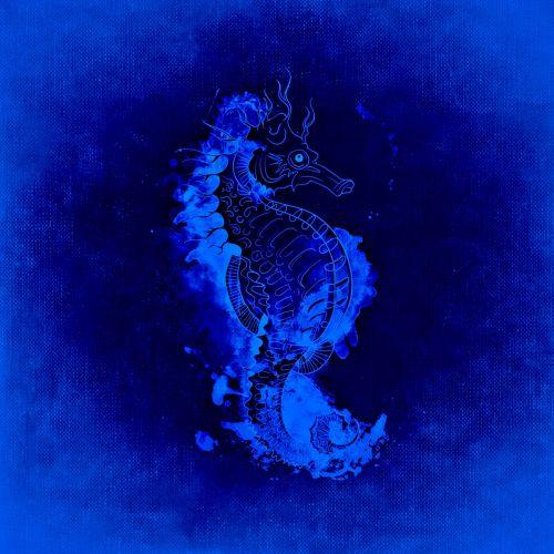 jūrų arkliukas,povandeninis pasaulis,jūra,meeresbewohner,padaras,žuvis,jūrų augalija ir gyvūnija
