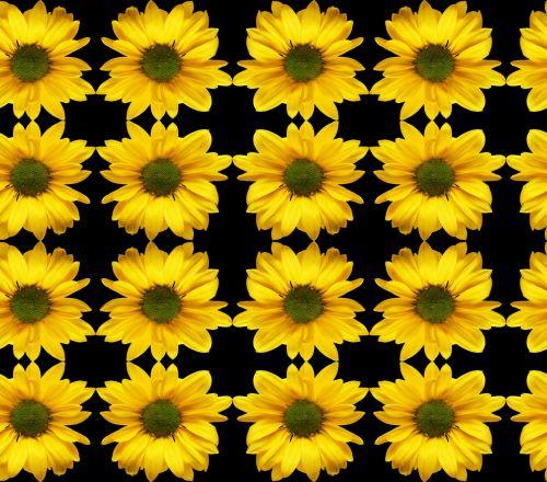 astronas, besiūliai, modelis, kompiuteris, simetrija, skaitmeninis, nuotrauka, menas, vaizdas, ornamentas, modelis, fonas, augalas, harmonija, elegancija, Kaleidoskopas, saulėgrąžos, gėlė, besiūlus modelis su gėlėmis