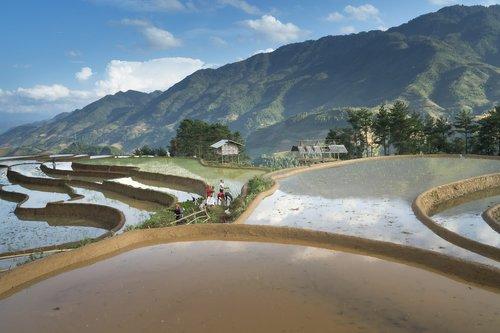 sezonas, pilti vandenį, persodinami ryžių, mažuma, laukas, ryžių, terasos, akliesiems ruožas šukų, natūralus, pilnas spalvų, kelionė, aplinka, kultūros, kreivė, Azijoje, Žemdirbystė, kalnų, ūkis, šilko, ekologinio, žemės, derlius, slėnis, ūkininkas, Vietnamas