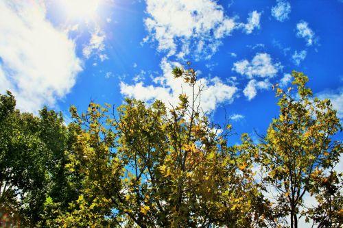 medžiai, žalia-geltona, dangus, mėlynas, ruduo, sezonai, keičiasi sezonai