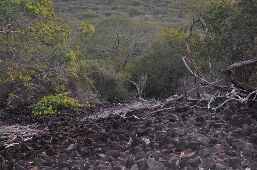 Serra,juoda,šaltinis,vulkaninis