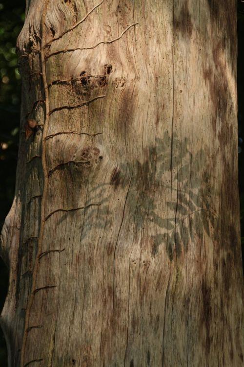 šešėlis,medis,mįslingas
