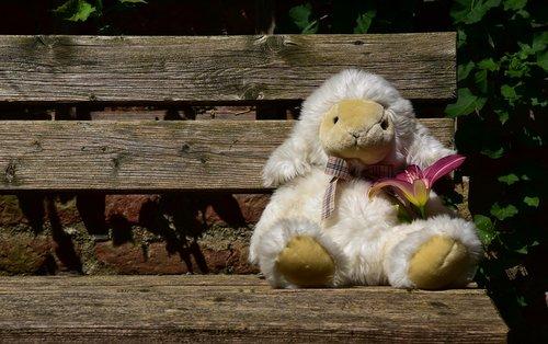 avių, laukti, gyvūnas, meškiukas, minkštas žaislas, gėlė, vien, nėra, tuščia, erdvė, tuščia vieta, mielas, baltas