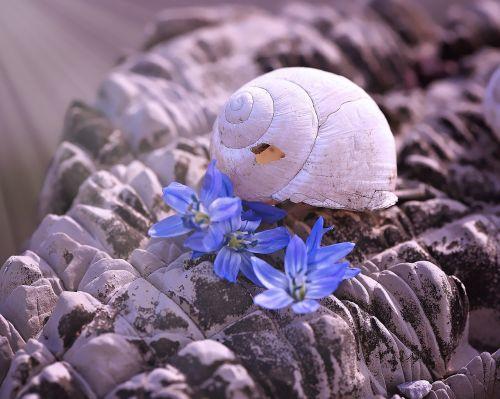 lukštas,tuščia sraigė,tuščia,pažeista,sraigės namai,akmuo,gamta,palikti,gėlės,Uždaryti