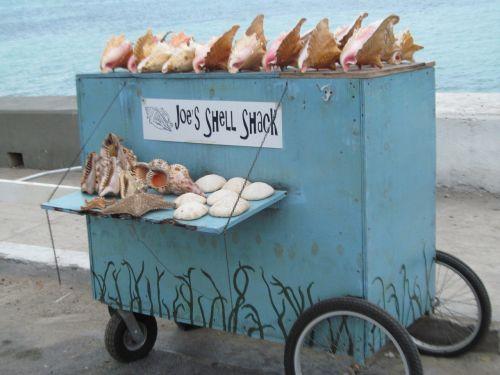 kriauklės,suvenyras,dovanos,kelionė,atostogos,dizainas,kultūra,šventė,simbolis,pardavimas,amatų,karibai,parduoti,parduoti,turistinis,prekes,jūra,Jamaika,sala,Kelionės tikslas,prekės,turizmas
