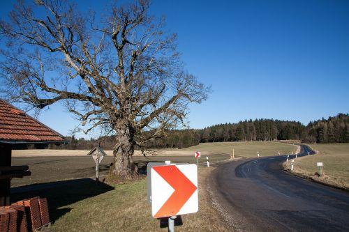 skydas,kelio ženklai,kreivė,rizika,kelio zenklas,strėlės,kelias,įspėjimas,teisinga kreivė,raudona,atspindinti,tvartas,medis,senas,gnarled,miškas