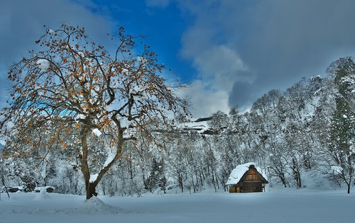 Shirakawa eiti, Žiemos, persimonai, Strzecha kotedžai, sniegas, pirminis scenos Japonija, Hida Takayama, Japonija, natūralus