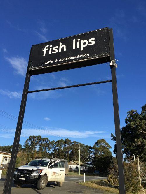 ženklas,žuvies lūpos,žuvis,lūpos,juokinga,piktograma,kavinė,apgyvendinimas