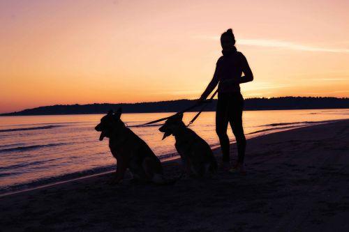moters siluetas,pajūrio siluetas,moteris,siluetas,jūros dugnas,saulėlydis,naminis gyvūnėlis,augintinis su savininku,gyvūnai,Vokiečių aviganis,šunys,šaunūs šunys,šunų siluetas