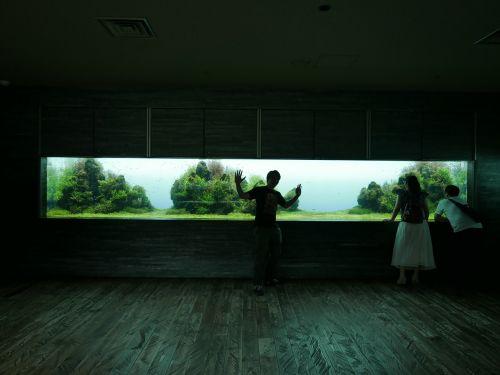 siluetas,akvariumas,Tokyo,tamsi,akvariumas,zoologijos sodas,turistinis