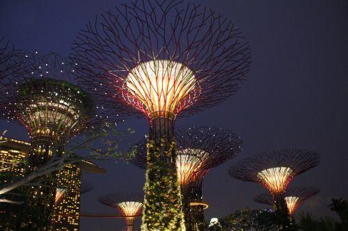 Singapūro sodas prie įlankos,supertree,Singapūras,orientyras,įlanka,parkas,architektūra,asija,pritraukimas,miestas,kelionė,šviesa,miesto panorama,turizmas,panorama,sodas,scena,pastatas,skulptūra,naktis