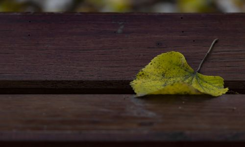 vienas lapas,geltonas lapas,rudens lapas,stendas