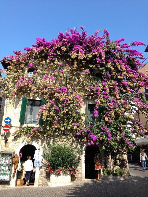 sirmione,gėlės,namas