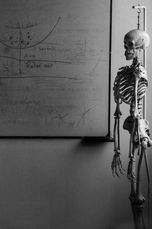 skeletas,biologija,Svetainė