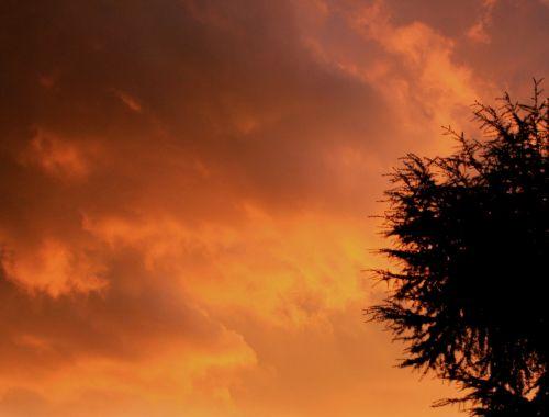 dangus,oranžinė,šiltas geltonasis,šiltas auksas,šešėliai,Debesuota,audra,žėrintis,medis