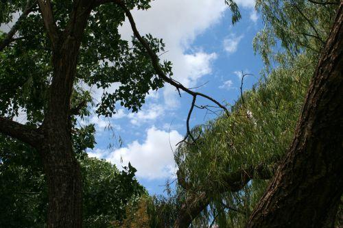 medžiai, aukštas, dangus, atidarymas, mėlynas, debesis, balta, dangus ir debesis per medžius