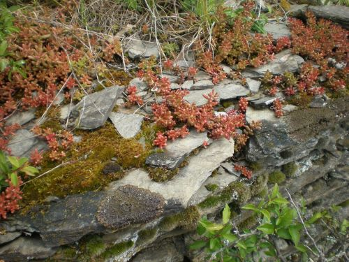 šiferis,sluoksnis,Rokas,bemoost,augalas,gamta