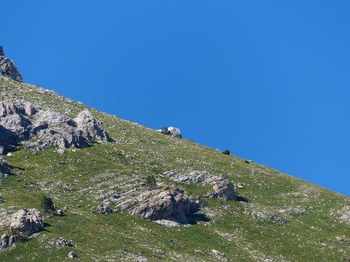 Nuolydis, Pranešta, Kalnų Pieva, Pasviręs, Nuolydis, Kalnai, Alpių, Jūrų Alpės, Monte Mongioie, Mongioie, Ligurijos Alpės, Grande Traversata Delle Alpi, Gta
