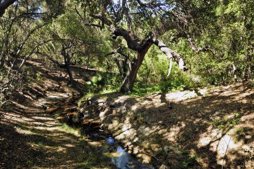 upelis, vanduo, miškas, žygiai, vaikščioti, lauke, srautas, botanikos, botanikos & nbsp, sodai, sodrus, žalias, medžiai, conejo & nbsp, botanikos & nbsp, sodai, tūkstančiai & nbsp, ąžuolų, pavasaris, vasara, augalai, Kalifornija, mažas upelis