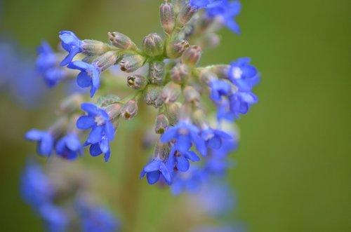mažos gėlės, violetinė, mėlyna, maža gėlė, žiedas, žydi, susieti gėlių, laukinių gėlių, gėlės, balta violetinė, violetinė gėlė, Violetinė, mažas, violetinė pobūdį, Iš arti, augalų, pobūdį, pavasaris, gėlė violetinė, žalias, vasara