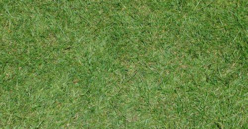 fonas, lygus & nbsp, žolė & nbsp, fonas, žolė, žolės, modelis, fonas, akmuo, siena, sienos, akmenys, pilka & nbsp, akmuo, pilka & nbsp, akmuo, modeliai, lygus žolės fonas