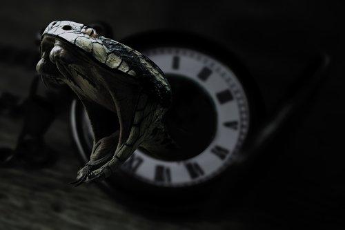gyvatė, laikrodis, juodos spalvos, nuodai, tamsiai, akys, gyvatės, gyvatė, gyvates roplys, dalykėliai, manipuliacijos