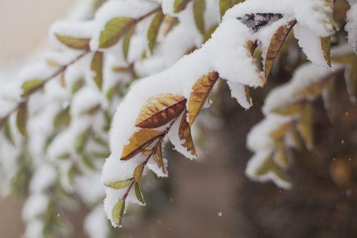 sniegas,padengtas,filialai,žiema,balta,lauke,žiemos medžiai