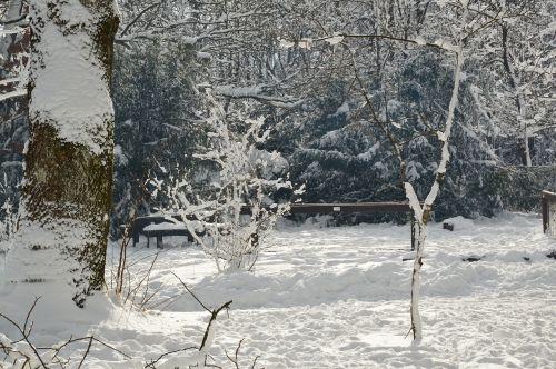sniegas,snieguotas,kraštovaizdis,gamta,žiemos gamta,žiema,medžiai,balta,saulės šviesa,sausis,šaltas,žieminis,mediena,snieguotas šaka,snieguotas medis,poilsis