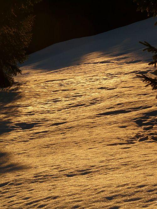 sniegas,žiema,žiemą,atgal šviesa,auksinis,saulė,medis,miškas,kraštovaizdis,šaltas,snieguotas,romantika,meilė,ilgesys