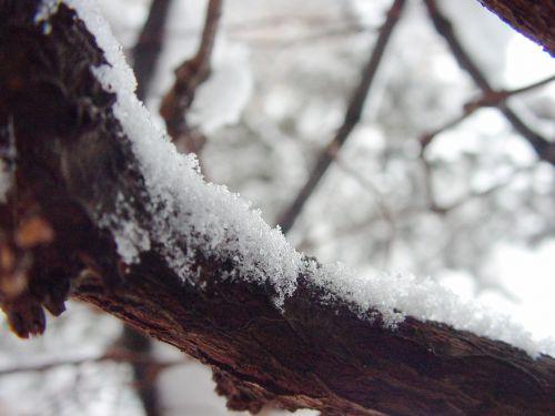 sniegas,filialas,snaigės,šaltas,šaltis,žiema,filialas sniege