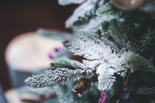 sniegas,medis,pušis,Kalėdos,žiema,xmas,dekoruoti,apdaila,Iš arti,Iš arti,Iš arti,makro