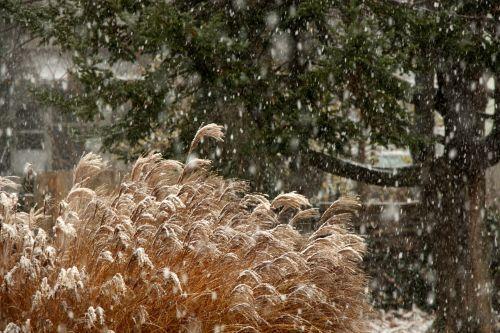 Sniegas,  Sniegas & Nbsp,  Kritimas,  Šaltas,  Ledas,  Balta,  Žiema,  Sezonas,  Sezoninis,  Chilly,  Snaigės,  Sniegas Kritimo 1