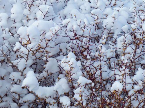 sniegas, krūmas, sniegas & nbsp, padengtas, balta, kristalas, sniegas & nbsp, dreifas, snowdrift, žiema, žiema sniegas, sniegas ant rudos krūmo