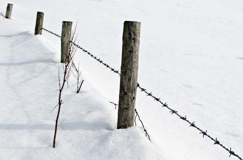 Sniegas,  Sniegas,  Balta,  Šaltas,  Sezonai,  Fonas,  Gruodžio Mėn .,  Sausis,  Kalėdos,  Žiema,  Mediena,  Gamta,  Tapetai,  Sniegas