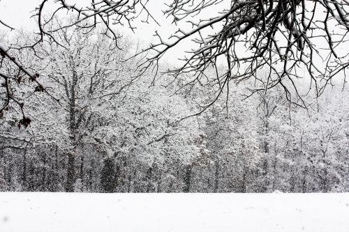 gamta, kraštovaizdis, žiemos & nbsp, scena, sniegas, sniegas, sniegas, sniegas & nbsp, kritimas, sniego dribsniai, šaltas, žiema, laukas, miškai, medžiai, sniegas & nbsp, padengtos & nbsp, filialai, sniegas miške
