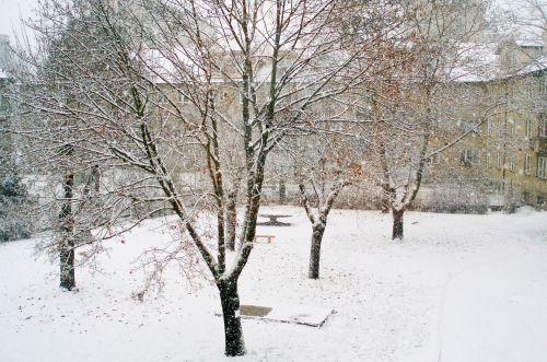 žiemos sezonas, sniegas, kraštovaizdis, Kalėdos, xmas, sniegas, sniegas, kelionė, šventė, fonas, drobė, Čekija & nbsp, respublika, Highland, medžiai, medis, sniegas - kraštovaizdis