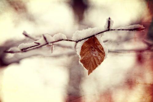 žiema, sezonai, sniegas, šaltas, šaltis, ledas, balta, medis, medžiai, filialas, filialai, gamta, natūralus, lapai, snieguotas šaka