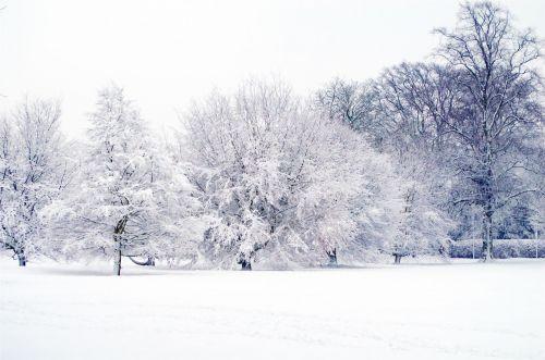 snieguotas, sniegas, snieguotas, sezonai, filialas, filialai, žiema, snaigė, stendas, temperatūra, gamta, fonas, be & nbsp, lapų, gražus, xmas, Kalėdos, kraštovaizdis, snieguotas kraštovaizdis 2