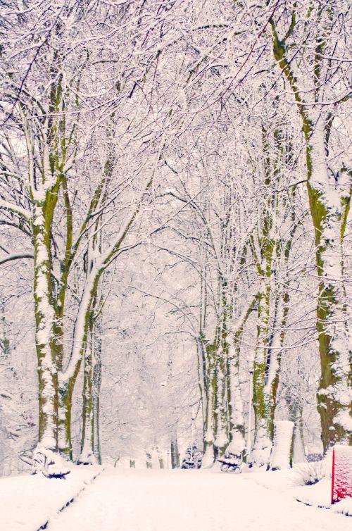 snieguotas, sniegas, snieguotas, sezonai, žiema, medis, medžiai & nbsp, be & nbsp, lapų, ledas, balta, gražus, kraštovaizdis, temperatūra, minusas, snaigė, sniegas & nbsp, viršelis, spalvingas, šlapias, šaltas, parkas, šaligatviai, dangas, snieguotas parkas