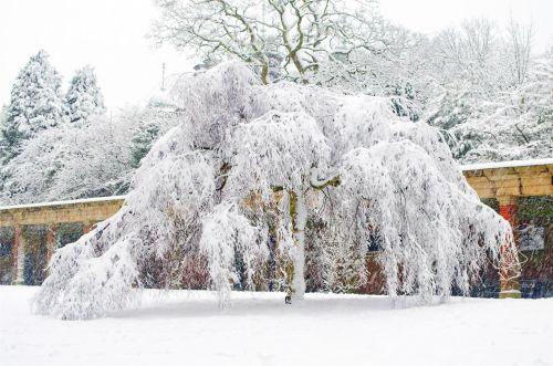 snieguotas, sniegas, snieguotas, sezonai, žiema, medis, medžiai & nbsp, be & nbsp, lapų, ledas, balta, gražus, kraštovaizdis, temperatūra, minusas, snaigė, sniegas & nbsp, viršelis, spalvingas, šlapias, šaltas, parkas, snieguotas medis