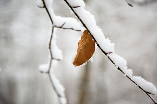 žiema, sezonai, sniegas, šaltas, šaltis, ledas, balta, medis, medžiai, filialas, filialai, gamta, natūralus, snieguotas žiemos šaka
