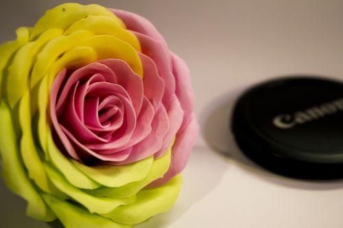 muilo gėlės,gėlė,raudona ir geltona,Rhodes,rožė,apdaila
