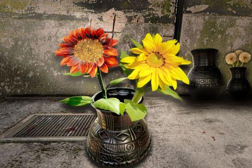 vis dar & nbsp, gyvenimas, gėlė, saulėgrąžos, fonas, siena, vis dar gyvenimas saulėgrąžomis