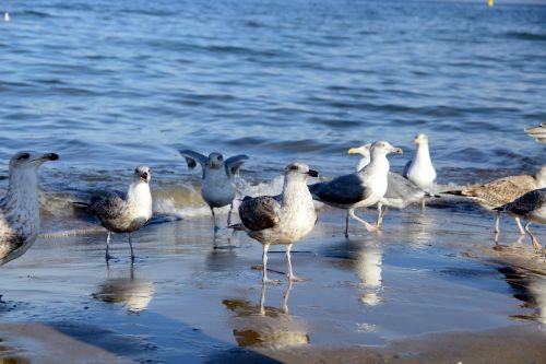jūra,kačiukai,Lenkija,papludimys,vaizdas į jūrą,Baltijos jūra,vanduo,lenkų jūra,šventė
